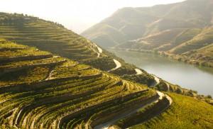 Dourotal - Hier kommt der Portwein her