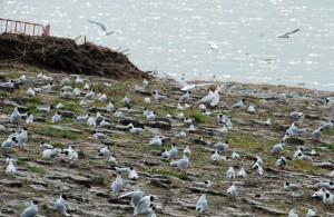 Nordsee und Wattenmeer: usprüngliche und geschützte Landschaft