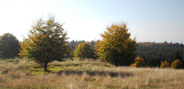 Herbst im Kellerwald