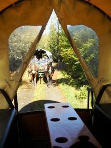 Planwagenfahrt durch den Nationalpark