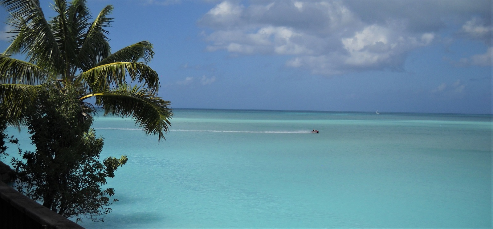 caribbean-T